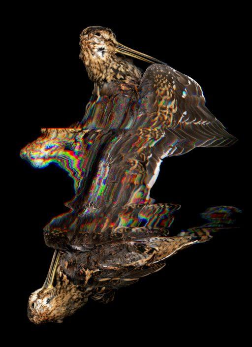K.Backes_oiseau_04