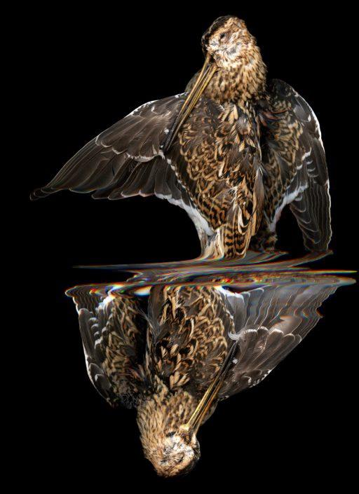 K.Backes_oiseau_05