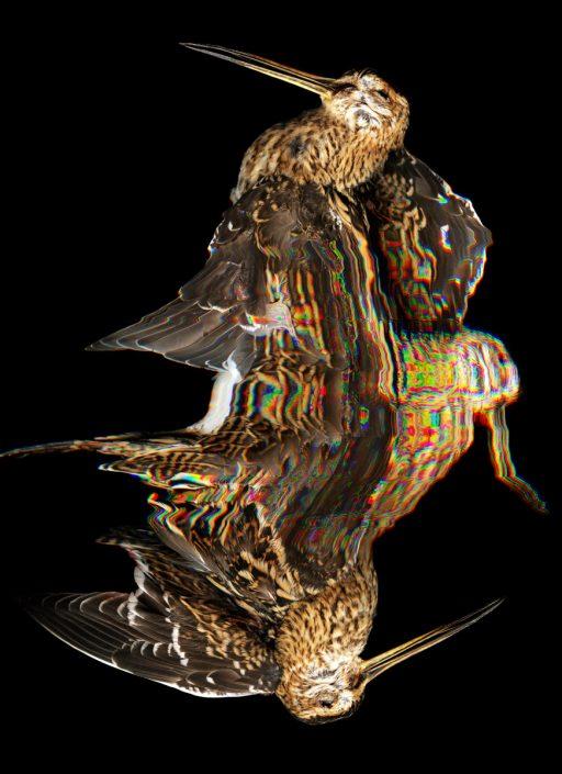 K.Backes_oiseau_06