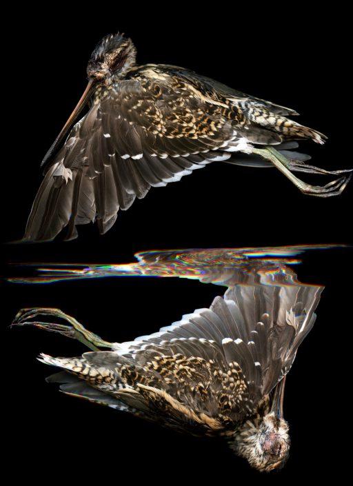 K.Backes_oiseau_07